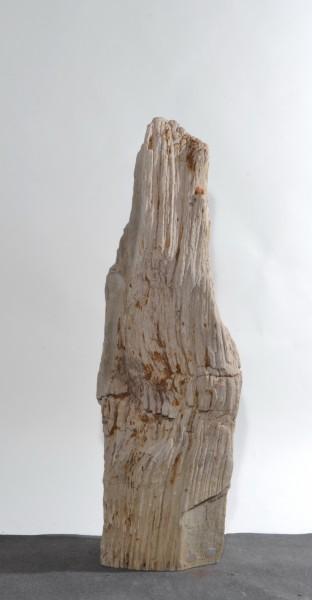 Versteinertes Holz HZ15842