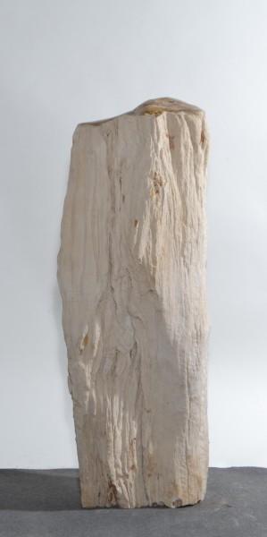 Versteinertes Holz HZ15819