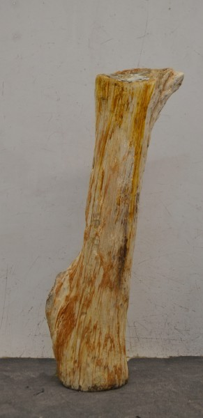 Versteinertes Holz HZ16705