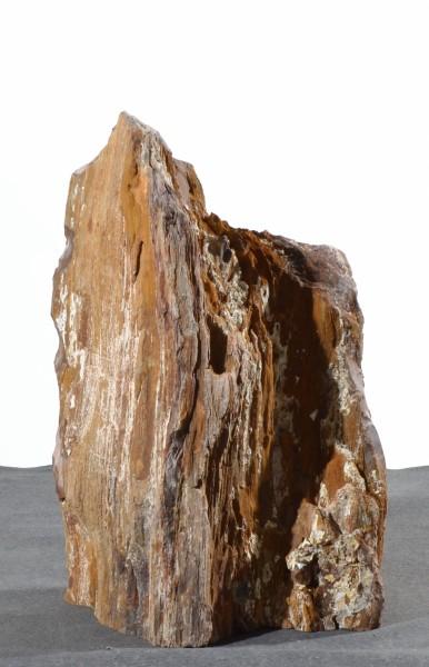 Versteinertes Holz HZ15130