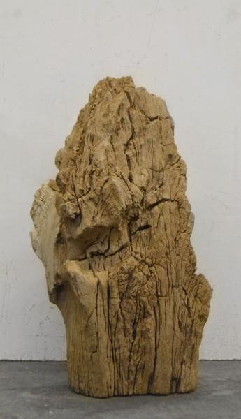 Versteinertes Holz HZ16698