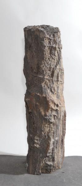 Versteinertes Holz HZ15856