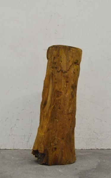 Versteinertes Holz HZ16710