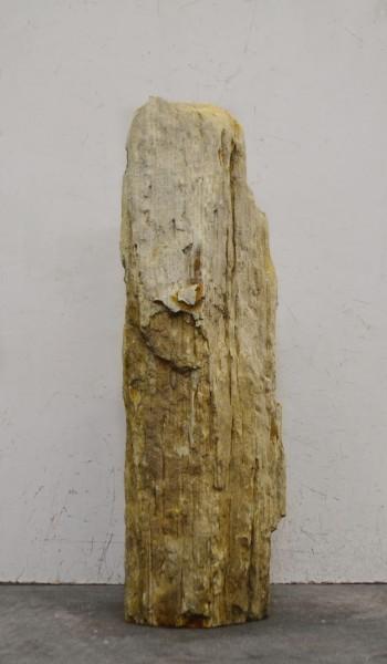 Versteinertes Holz HZ16674