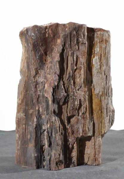 Versteinertes Holz HZ15117